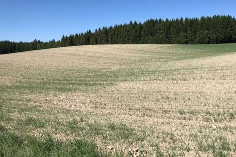 Norwegian field afflicted by drought.