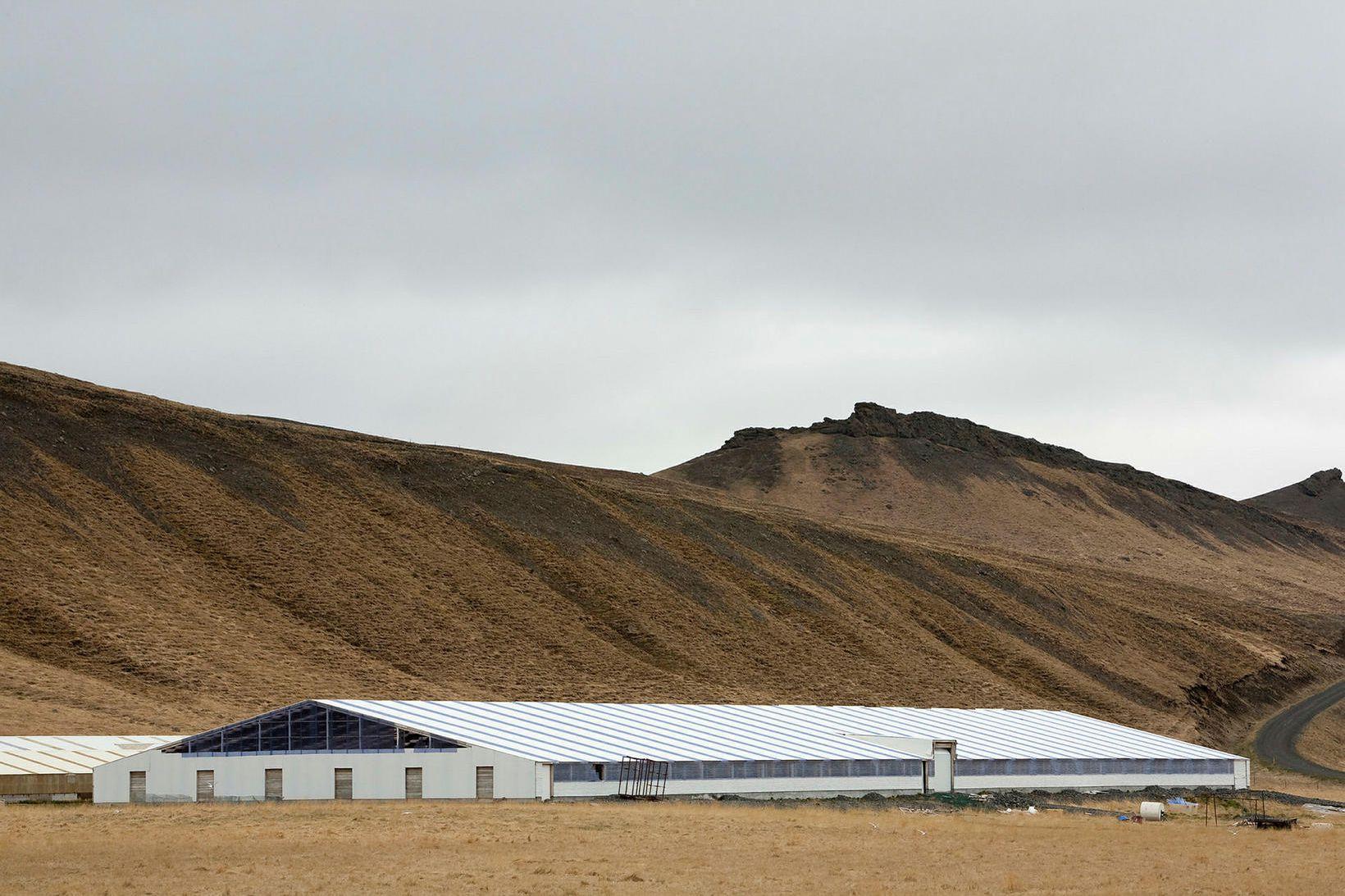 Nýjasta minkahúsið í Héraðsdal II var byggt 2006, alls liðlega …