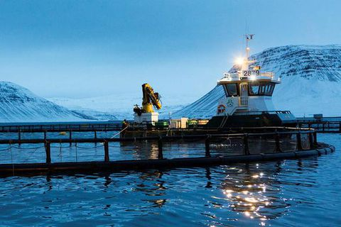 Fish farming is a rapidly growing industry in Iceland.