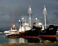 Whaling vessels Hvalur 8 and Hvalur 9 docked at Reykjavik harbour.