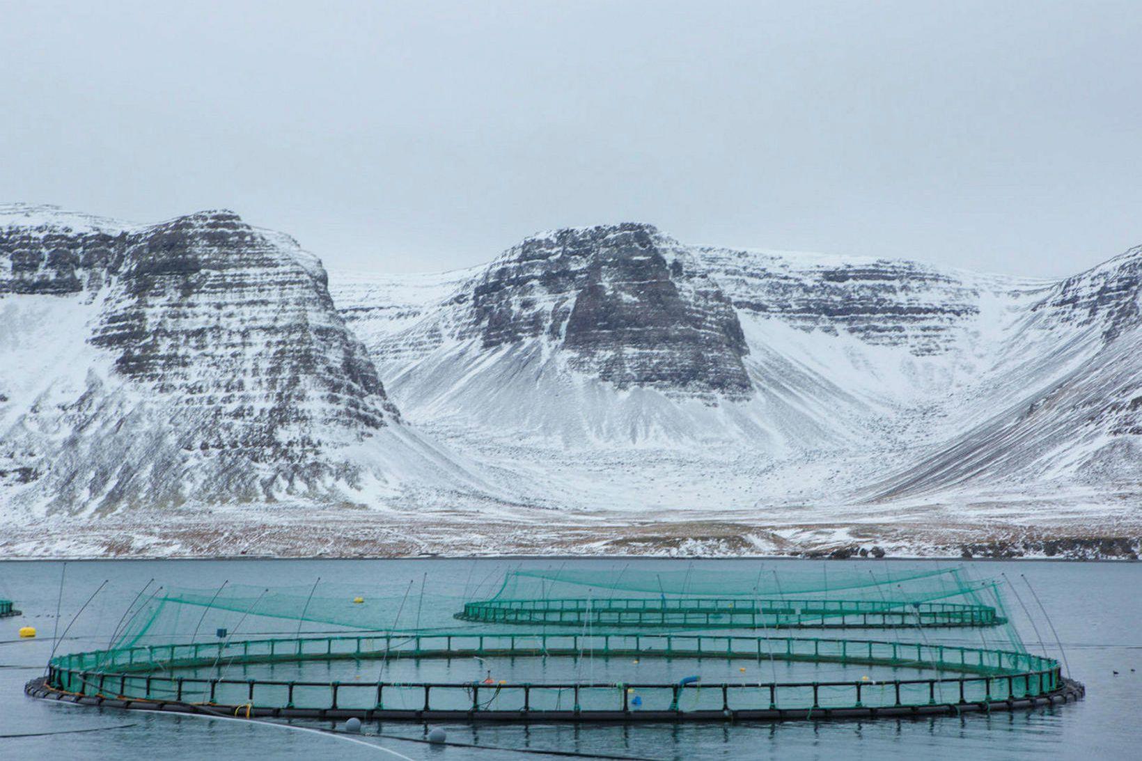 Sjókvíar Arnarlax í Tálknafirði. Fyrirtækið er stærsta fiskeldisfyrirtæki landsins.