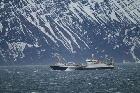 Grænlenska skipið Polar Amaroq er búið að næla sér í 20 til 30 tonn af …