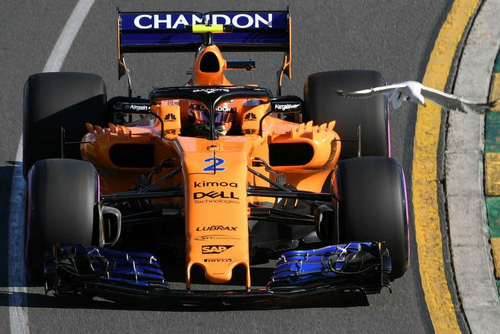 Óvæntur gestur flýgur við hlið McLarenbíls Stoffels Vandoorne í tímatökunni í Melbourne.