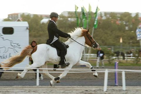 "Riding a horse in the ""skeið"" or flying pace is considered very fine horsemanship."