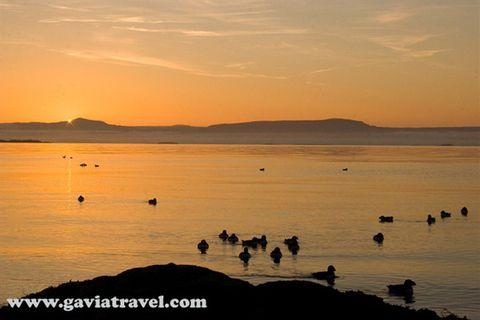 Gavia Travel
