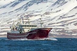 Nýr Vilhelm Þorsteinsson á leið til hafnar á Akureyri.