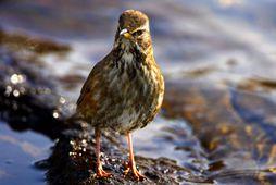 280218-birdsong_1