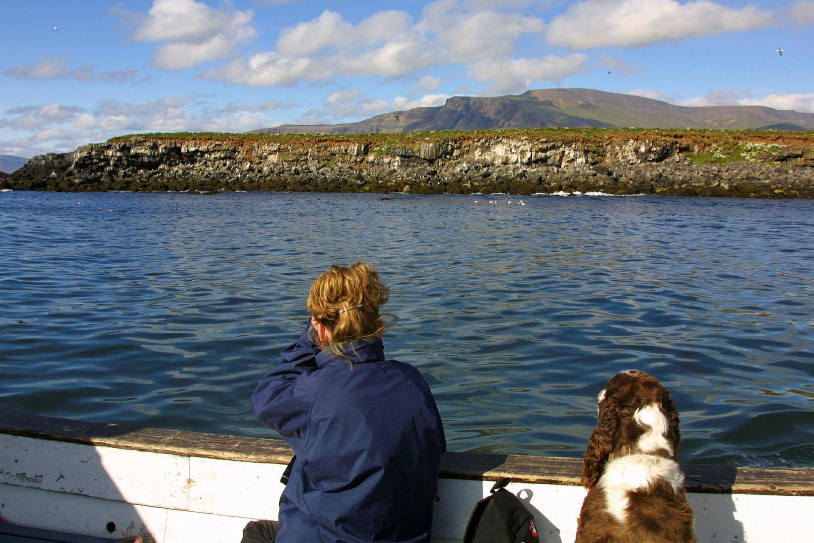 Í Lundey á Kollafirði eru heimkynni um 10 þúsund lundapara.