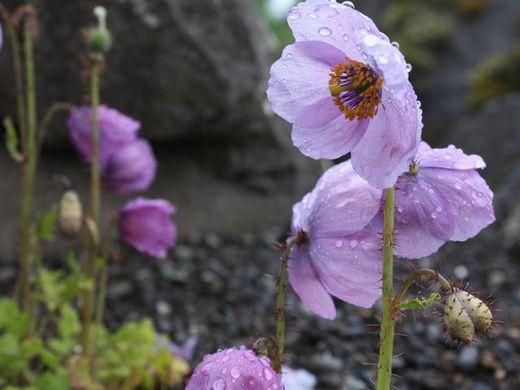 Free Guided Tour in English at the Reykjavik Botanic Garden