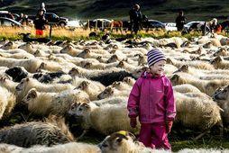 Í búvörulögum, sem samþykkt voru á Alþingi í september, er kveðið á um að skipaður …