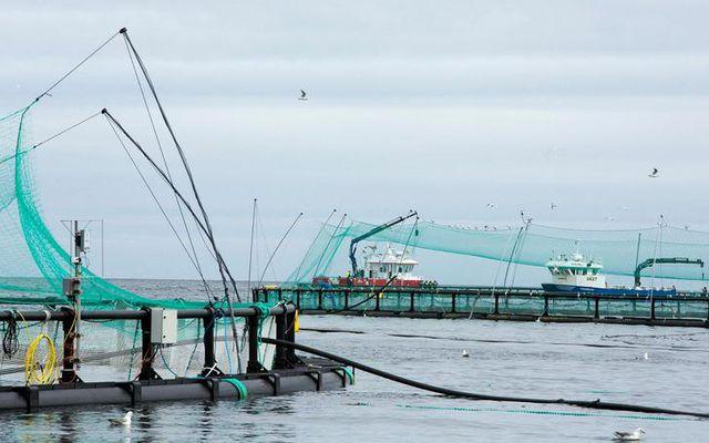 Kröfur um ógildingu rekstrarleyfis til fiskeldis í Ísafjarðardjúpi var hafnað.