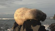 Walrus found in East Iceland