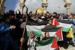 Palestínskir múslimar við Al-Aqsa moskuna í Jerúsalem í vikunni. Þar safnast mikil mannfjöldi saman daglega.