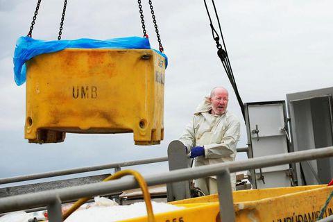 Minke whale meat being landed in Hafnarfjörður.