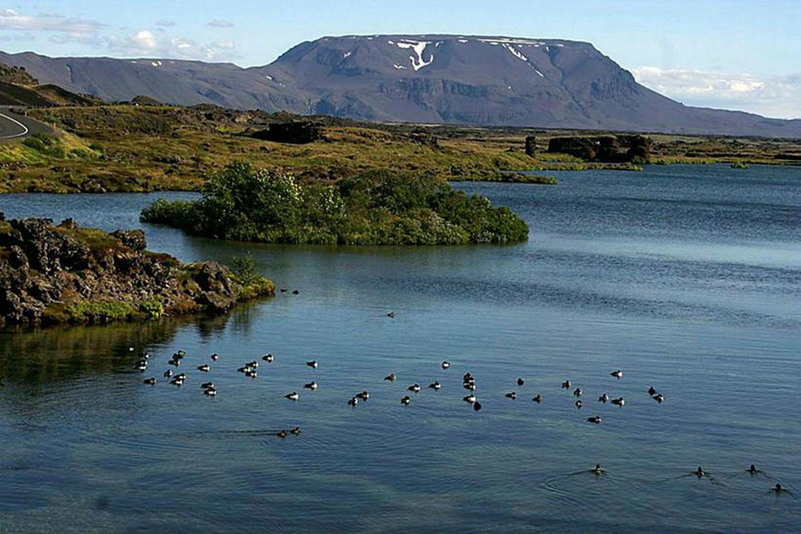 Mikil umræða hefur verið uppi um verndun lífríkisins á Mývatni.