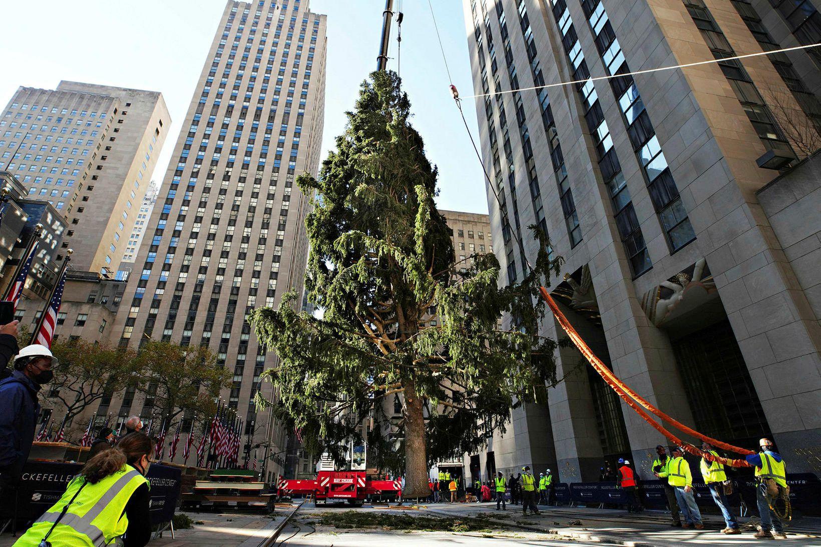 Jólatréð í Rockefeller Center í New York borg er komið …