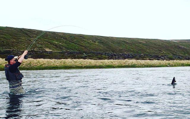 Skemmtilegt augnablik sem hefur verið fryst í Laxá í Laxárdal. Þarna er 65 sentímetra urriði …