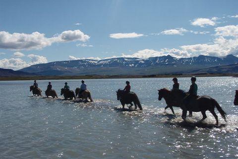 Guðrún Fjeldsted