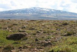 Landgræðsla og skógrækt eru lykilþættir í aðgerðaráætlun stjórnvalda í loftslagsmálum.