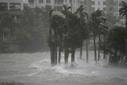 Miami-áin er yfirfull af vatni.