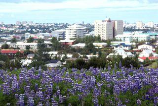 Hópurinn var skipaður í lok nóvember, í kjölfar 12. samráðsfundar stjórnvalda og aðila vinnumarkaðarins.