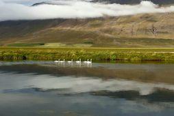 Bríkarhylur í Vatnsdalsá. Höfundur kallar þessa mynd, Fjölskylda á leið í veiði.