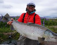 The great brown trout caught in lake Þingvallavatn last night.