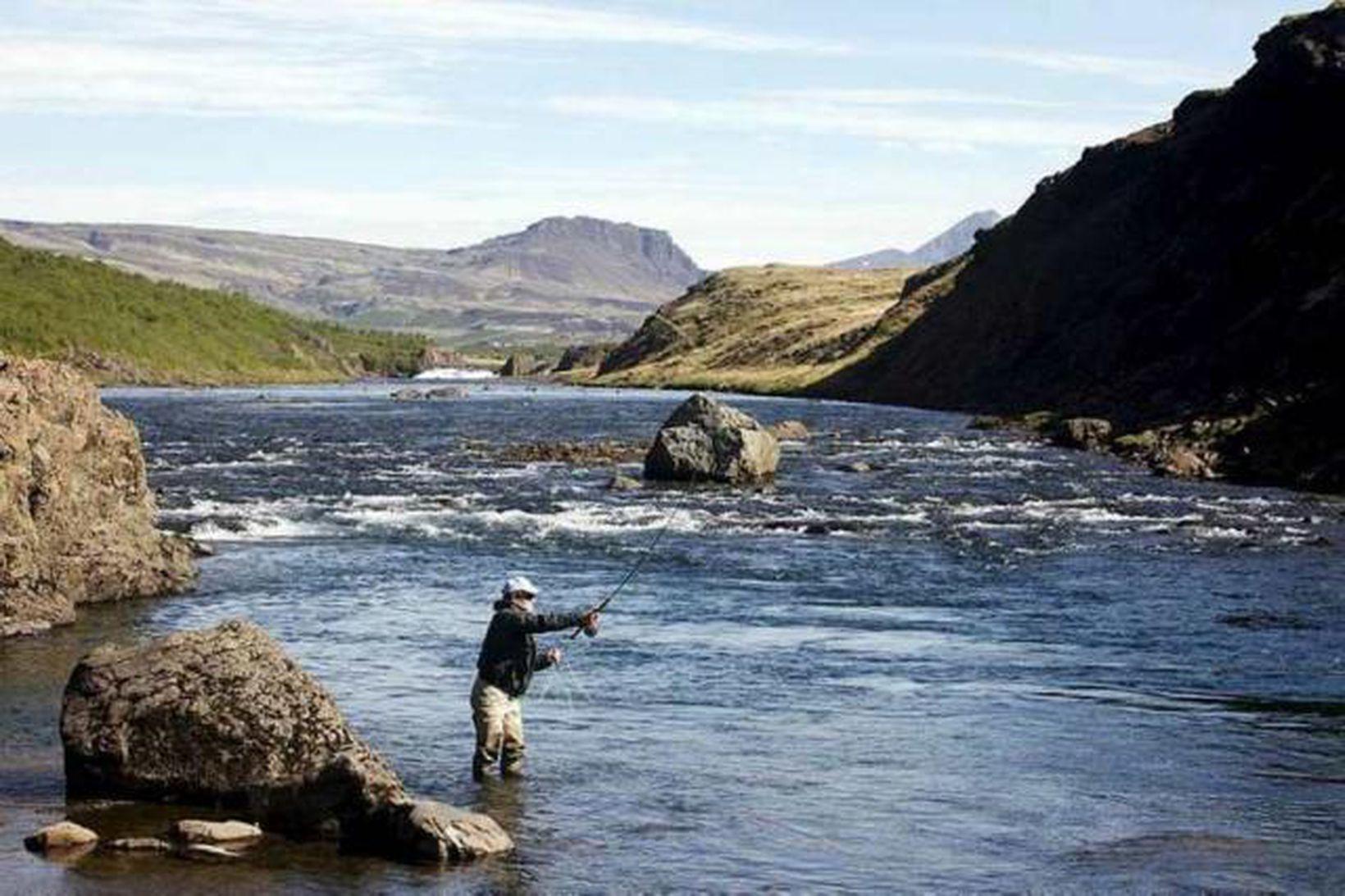 Það veiddust 50 laxar á morgunvaktinni í Norðurá í dag. …