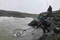 Laxi landað í beljandanum við Urriðafoss á opnunardaginn 2018.