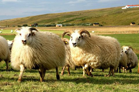 Don't forget the two-sheep rule.