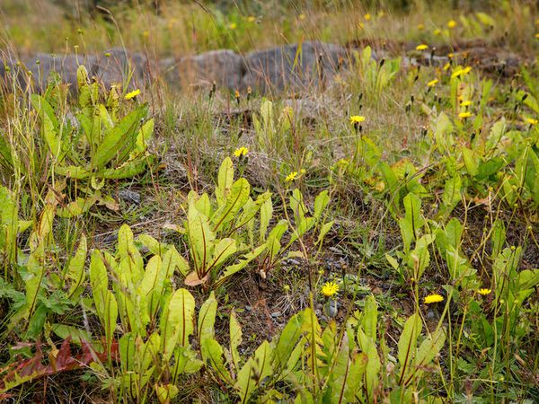 The environmental minister recommends limiting the use of herbicides as much as possible.