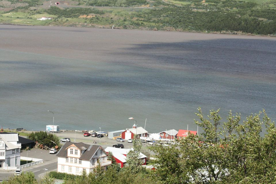 Miklir vatnavextir eru í Eyjafjarðará.