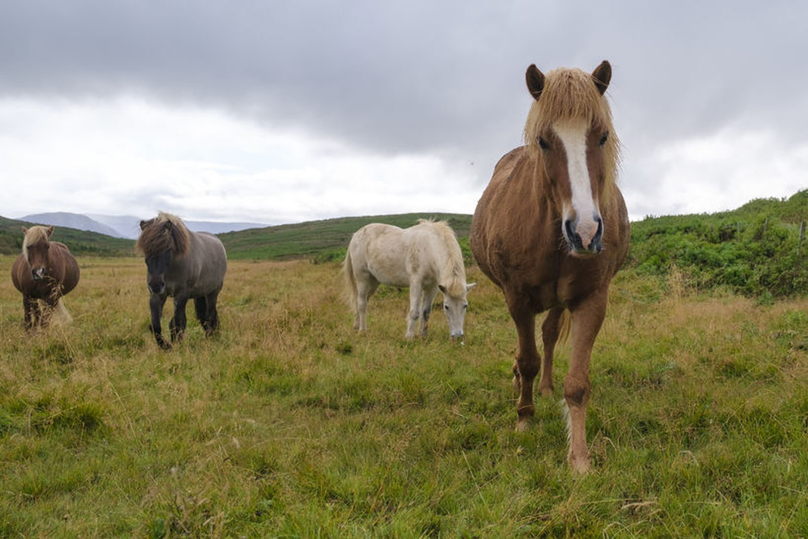 Þessir fallegu hestar voru á beit í Hafnarfirði í góða …
