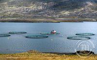 Fiskeldi - Berufjörður -  Djúpivogur