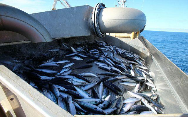 Allur uppsjávarfiskur sem landaður er í höfnum sem taka við meira en 3.000 tonnum af …