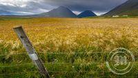 Kornakur við Hvassafell í Eyjafyrði