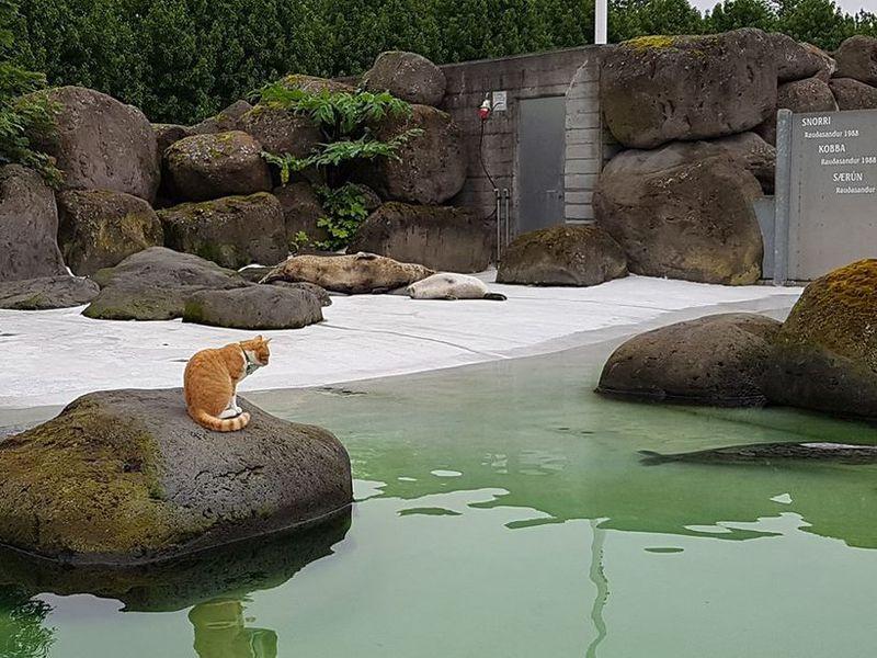 Karíus sitting in the seal pond.