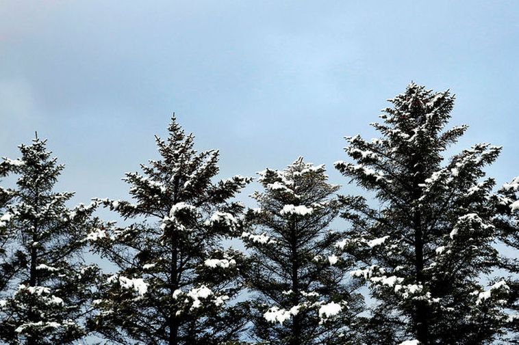 Trees clad in a coat of white this morning in Reykjavik.
