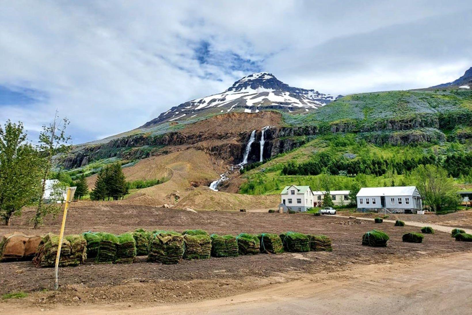 Þökur á svæðinu vestan við Búðaránna á Seyðisfirði.