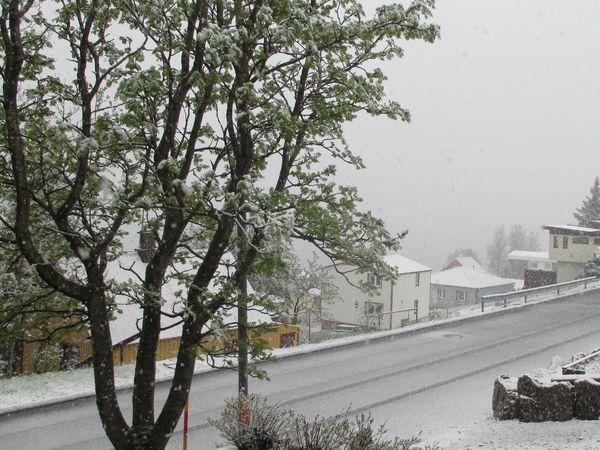 From Fáskrúðsfjörður, yesterday.