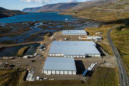 Seiðaeldisstöð Arctic Fish á Tálknafirði opnar með formlegum hætti í dag og er hún stærsta ...
