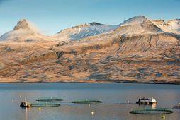 Fjárfest var í fiskeldi fyrir um 4 milljarða króna árið 2017.