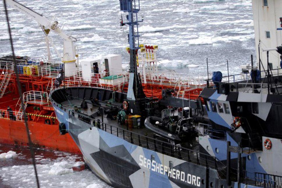 Skip Sea Shepherd siglir á japanskt hvalveiðiskip undan strönd Suðurskautslandsins.