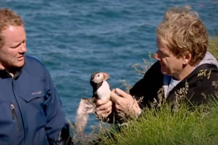 The bird managed to bite Ramsay's nose before flying off.