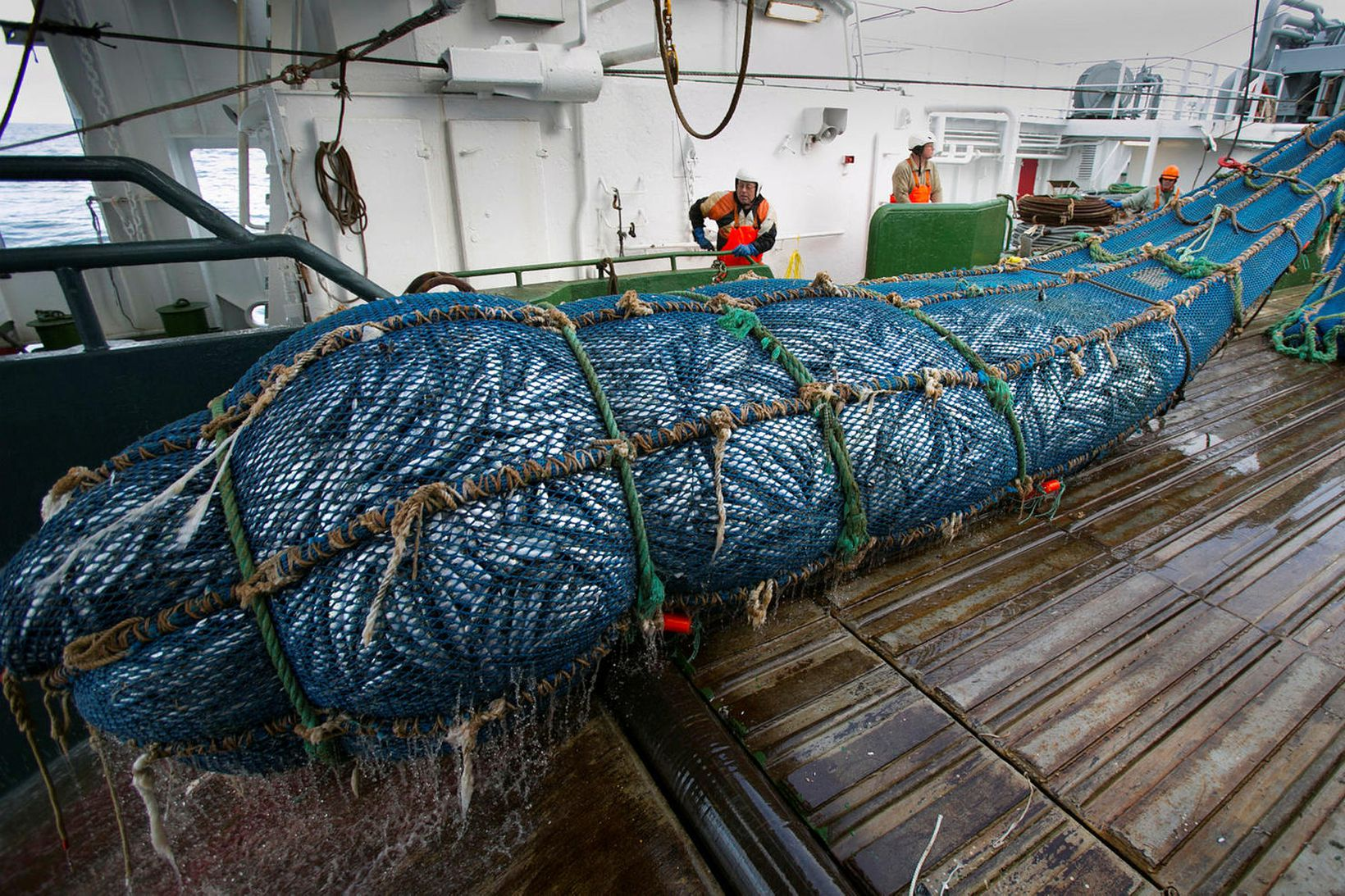 Uppsjávarskipin voru með rúmlega heildarafla íslenska flotans í fyrra. Uppsjávaraflinn …