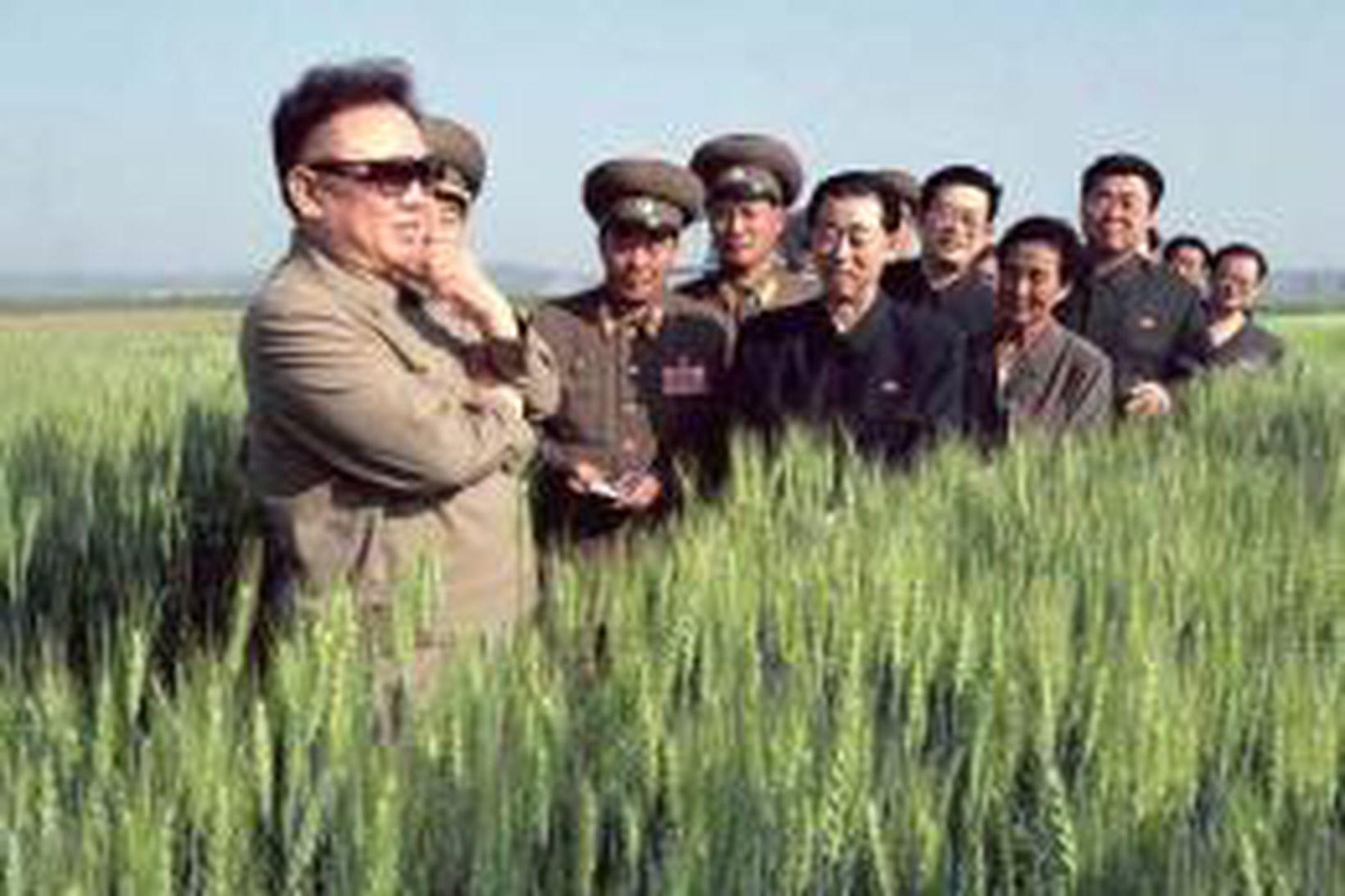 Kim Jong Il, leiðtogi N-Kóreu, t.v., skoðar akur þar sem …