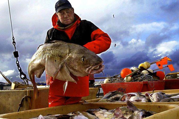 Fisheries are a vital part of the Icelandic economy.