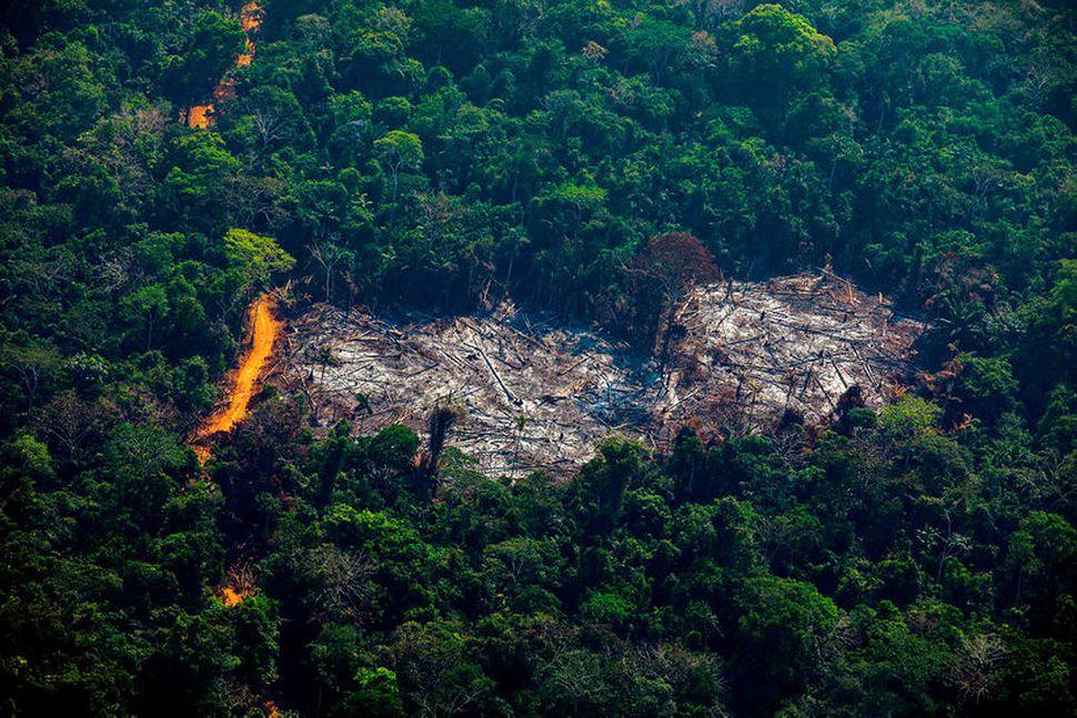 Frá svæði Menkragnoti-frumbyggja í Altamira, í Para-ríki í Brasilíu.