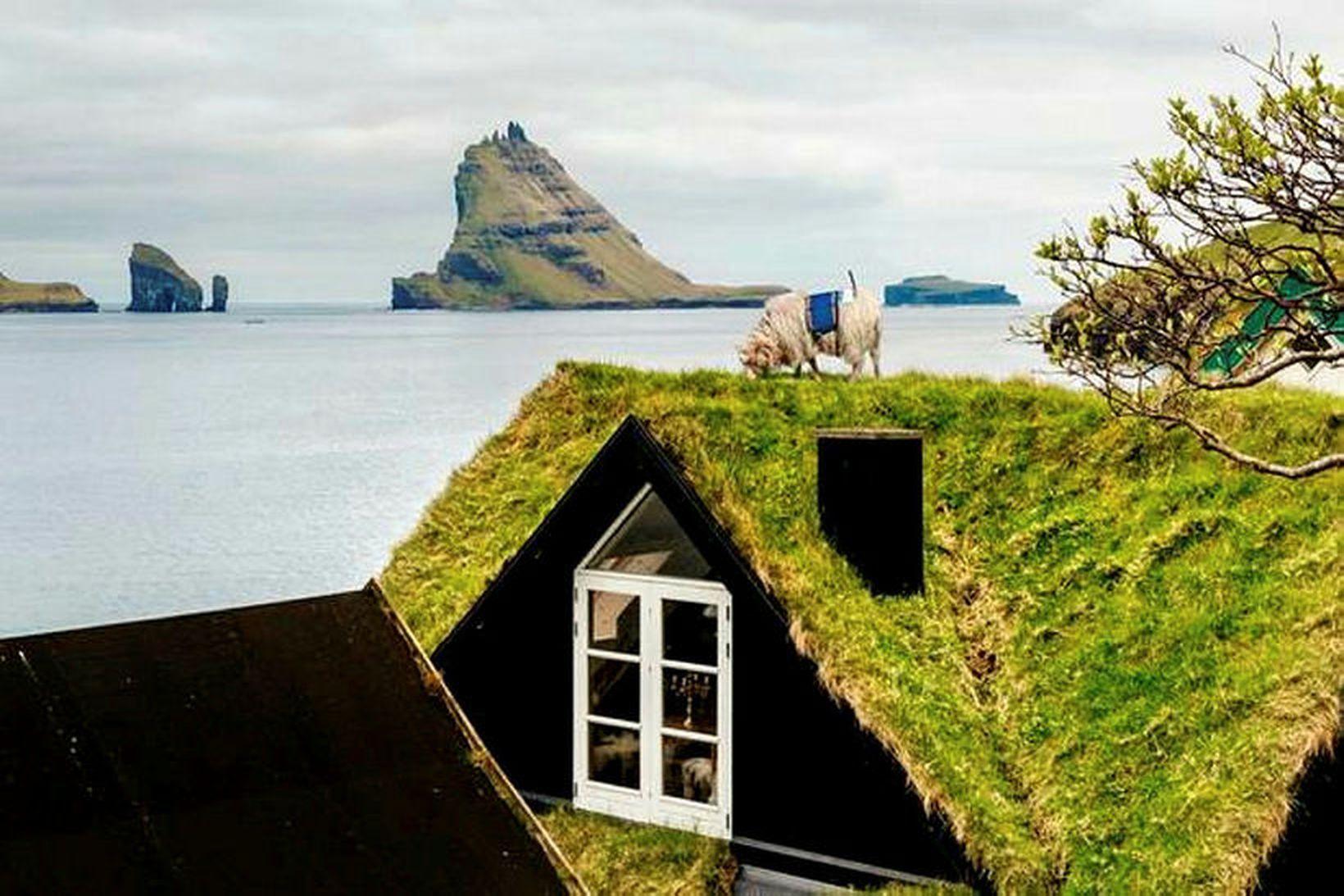 Ein af myndakindunum að störfum í Færeyjum sumarið 2016.