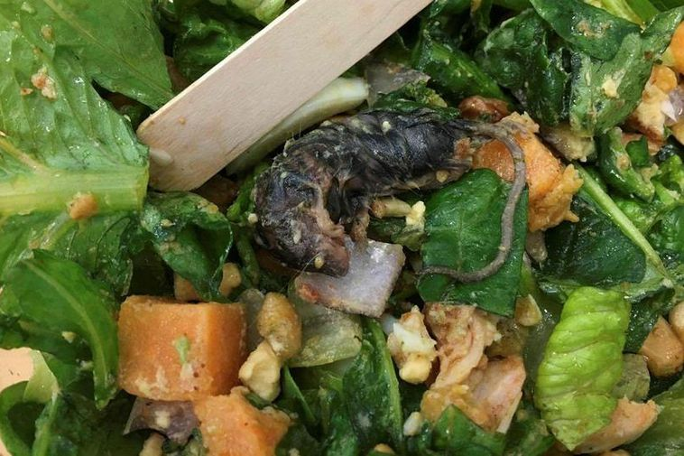 This dead little fellow was found in a salad by a rather surprised customer.
